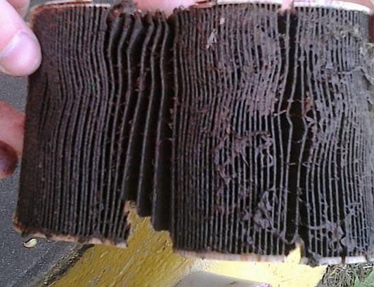 Сильно забитый грязью топливный фильтр