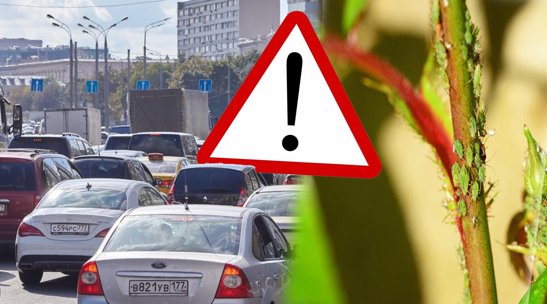 Как обычное насекомое может испортить лакокрасочное покрытие вашего автомобиля, что принесет вам убытки на десятки тысяч рублей